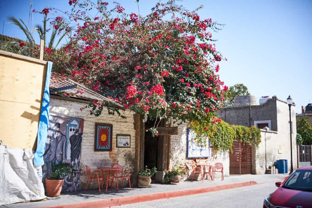 A small white storefront building with a large bush with red flowers growing over the top of it in Todos Santos, Mexico.