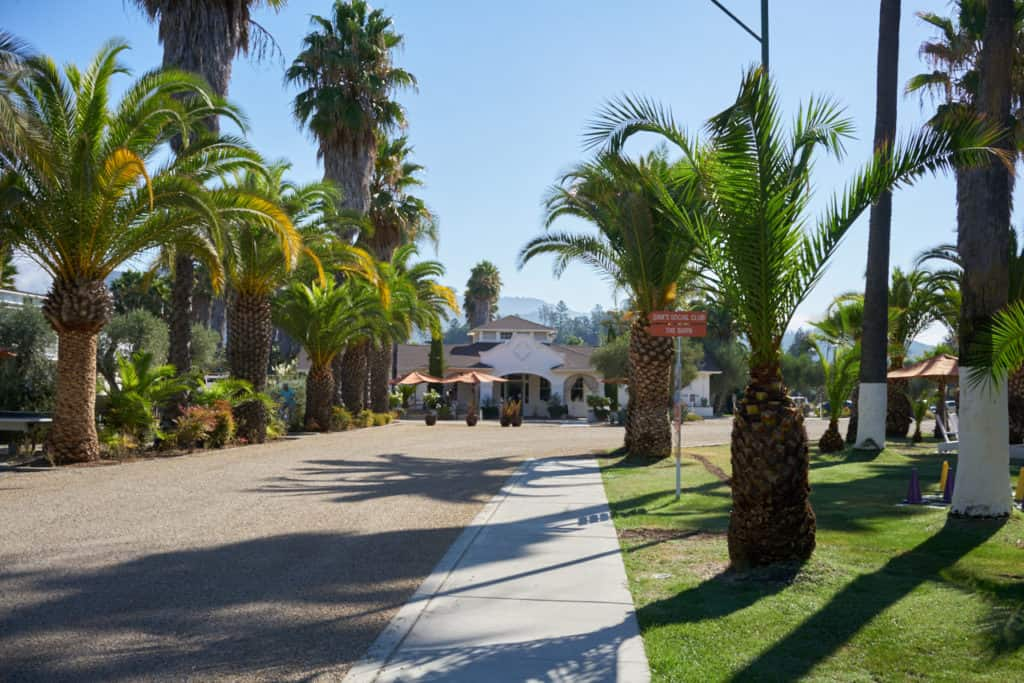 The driveway of Indian Springs Resort and Spa, lined with palm trees, leading toward a white stucco building.