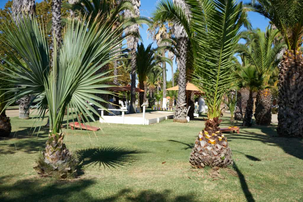The bocce ball court at Indian Springs surrounded by palm trees.