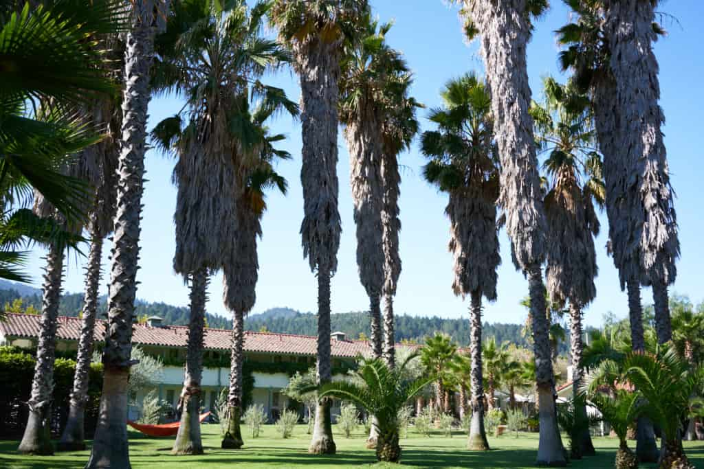 Large palm trees in the foreground in front of The Lodge rooms.