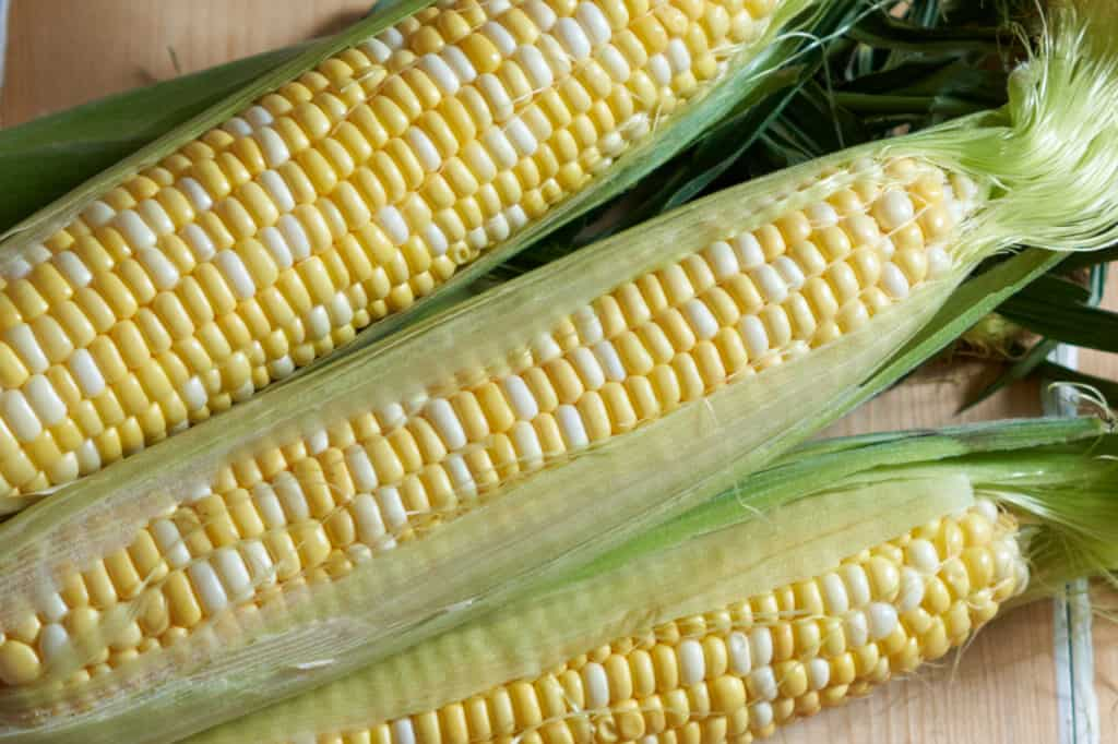 Three ears of fresh corn with the husks peeled back.