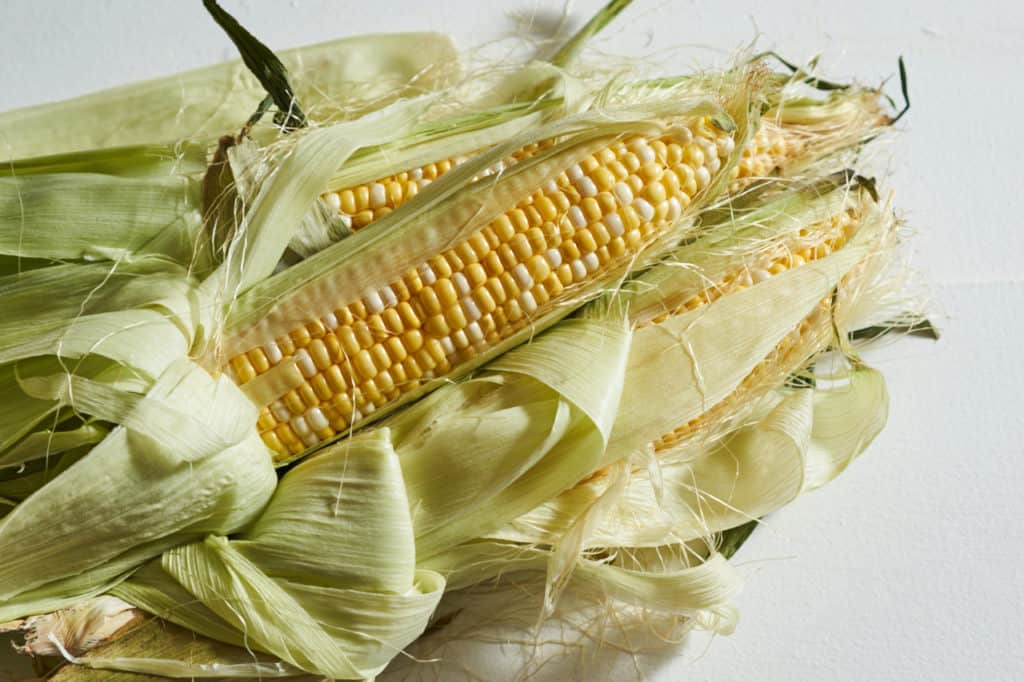 Several ears of fresh corn with the husks peeled back.